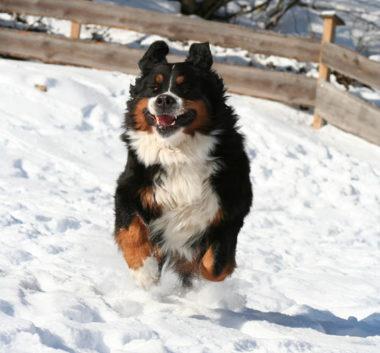 hondenvakantie lofer