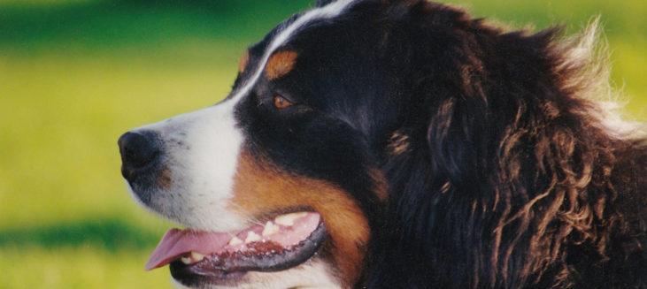 hondenvakantie in lofer